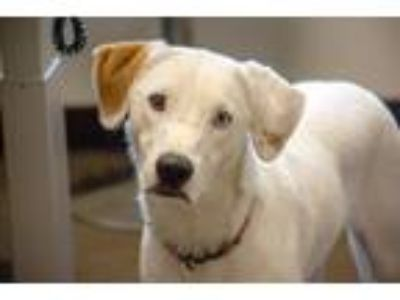 Adopt Remus a Border Collie, Hound