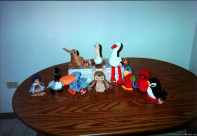 Ty Retired Beanie Baby Birds