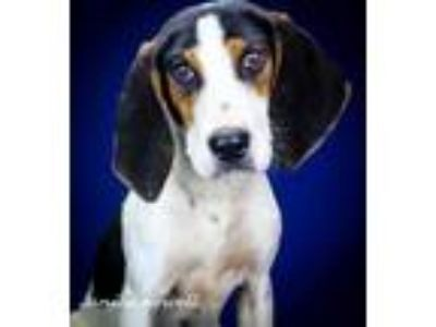 Adopt Emerald - 042307M a Black Hound (Unknown Type) / Mixed dog in Tupelo