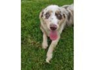 Craigslist Animals And Pets For Adoption Classifieds In Uniontown