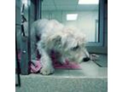 Adopt TRANSFER PENDING Bernie a White Mixed Breed (Small) / Mixed dog in Land