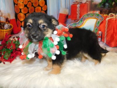 Craigslist Animals And Pets For Adoption Classified Ads In Chicago