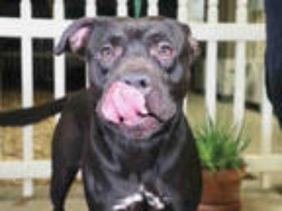 Adopt *CARNITAS a Black Mixed Breed (Medium) / Mixed dog in Ocala, FL (25927134)