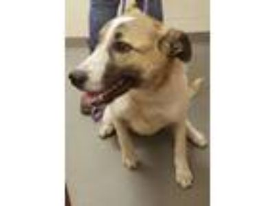 Adopt Topanga a White Anatolian Shepherd / Mixed dog in Amelia, VA (25462852)