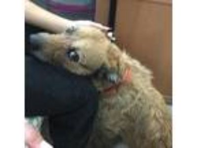 Adopt Ollie a Terrier (Unknown Type, Medium) / Mixed dog in Ft.