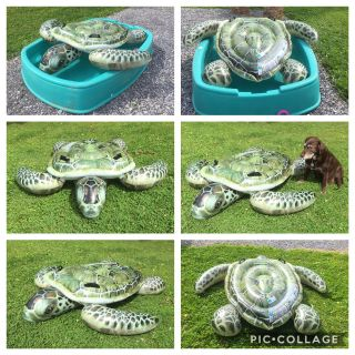 Intex 6 Turtle Ride-On Turtle Raft, perfect condition, asking $10 (cost $24 @Walmart) **READ PICK-UP DETAILS BELOW