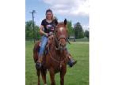 2005 Registered Quarter Horse Mare
