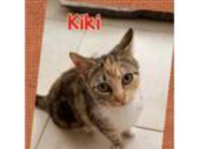 Adopt Kiki a Calico or Dilute Calico Calico (short coat) cat in Tri State Area
