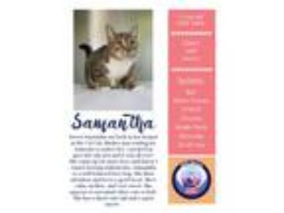 Adopt Samantha a Brown Tabby American Shorthair (short coat) cat in Edwards AFB