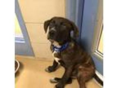 Adopt Tyler a Mixed Breed