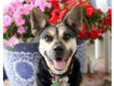 Adopt Gemma! 40 lbs! Watch my new video! Courtesy listing for Angel's Heart Dog