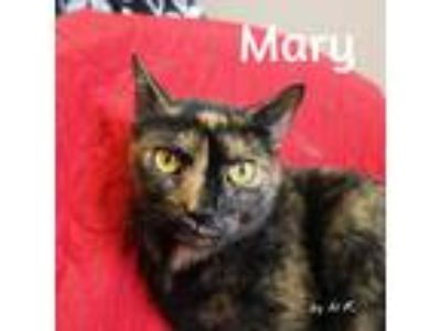 Adopt Mary a Tortoiseshell Domestic Shorthair (short coat) cat in Pleasantville