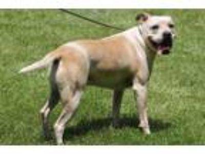 Adopt Pinto a Terrier