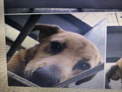 URGENT PLEASE HELP US..Kerr Co Animal Control has so many sweet dogs that need a home