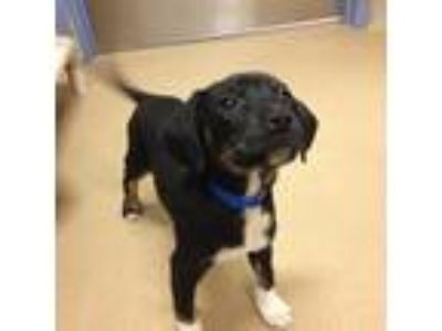 Adopt Henry a Black Terrier (Unknown Type, Small) / Mixed dog in Milwaukee