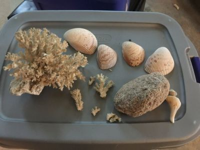 Aquarium/fish decor - shells, coral, white bottom gravel