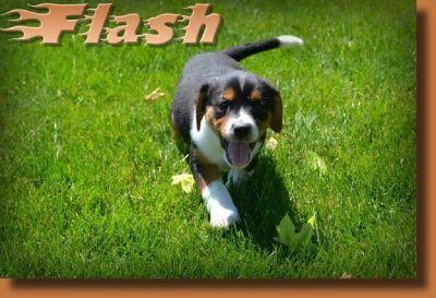 Flash Male Cavajack Mix