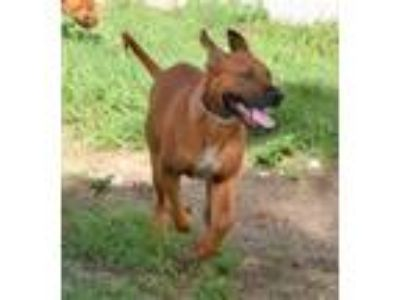 Adopt 41961257 - Available 6/21 a Hound