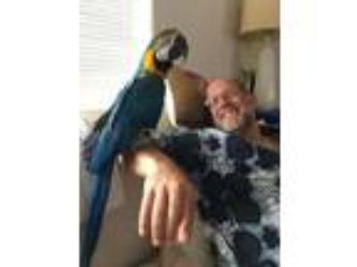Adopt Albert a Macaw