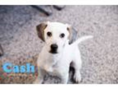 Adopt Cash a Hound (Unknown Type) / Mixed dog in Kendallville, IN (25892016)