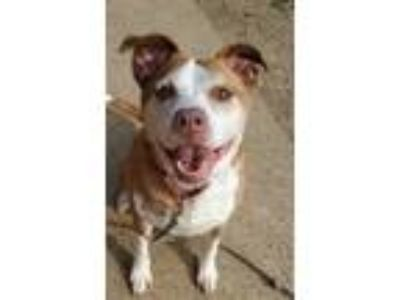 Adopt Rose a Collie, Terrier