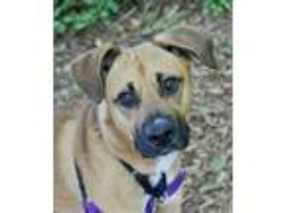 Adopt Parker a Tan/Yellow/Fawn Shepherd (Unknown Type) / Mixed dog in Lynnwood
