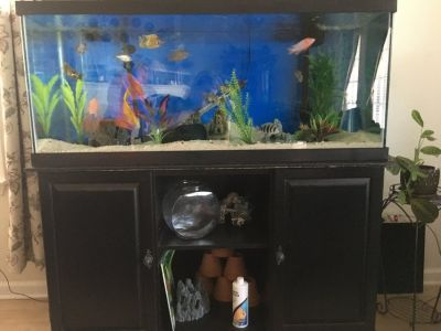 75 gallon fish tank/aquarium, stand, and filters