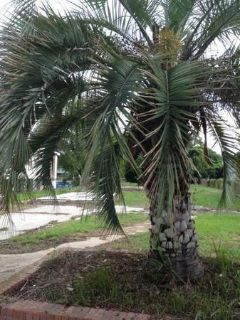 - $30000 Large peice of land for sale CHEAP Trade possible (Grand Caillou Road-Dulac)