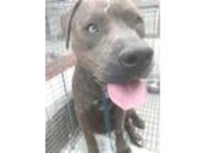 Adopt ADDISON a Brindle Terrier (Unknown Type, Small) / Mixed dog in St.