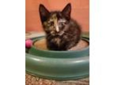 Adopt Ryanne19 a Domestic Shorthair / Mixed (short coat) cat in Youngsville