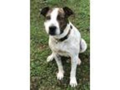 Adopt Marla a Hound, Pointer