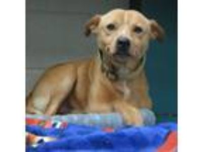 Adopt Fleetwood a Tan/Yellow/Fawn - with White Terrier (Unknown Type