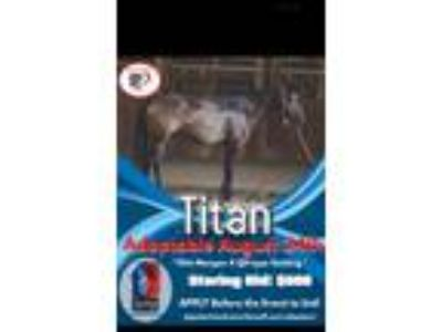 Adopt Titan Appalachian trainer faceoff. 100 days of training a Draft