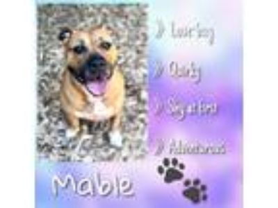 Adopt Mable a Boxer