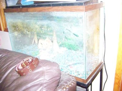 Fish Tanks with steel stands