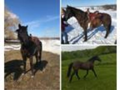 Athletic Mustang Mare Sale or Trade