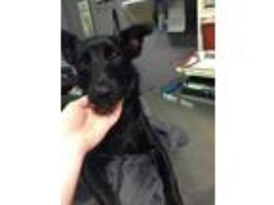 Adopt Oliver a Black Mixed Breed (Small) / Mixed dog in Charleston