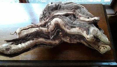 Driftwood for Reptile Habitat or Home Decor
