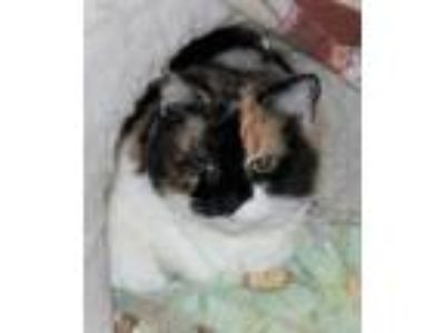 Adopt Briana a Calico / Mixed cat in Lutherville, MD (22668574)