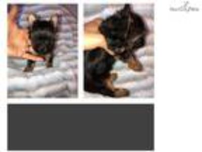 Puppy - For Sale Classified Ads near St Augustine, South Florida