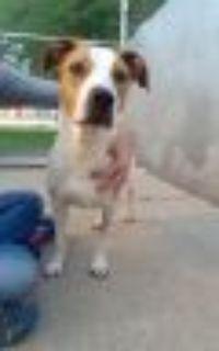 Brandi Hound Dog