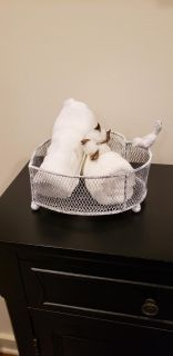 """White Distressed Rustic Metal Heart Shaped Basket with Sitting Bird Perched on The Side. 8"""" x 8"""" x 3.25"""" T."""