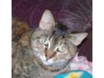 Adopt Minnie Pearl a Torbie