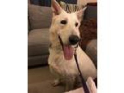 Adopt Kaja a German Shepherd Dog