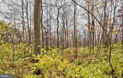 Lot 2 Black Diamond Rd Ephrata, Secluded wooded lot sitting