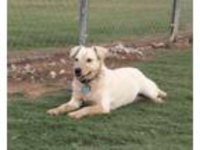 Adopt Jolene-F196 a Cattle Dog, Terrier