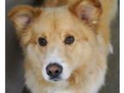 Adopt Max (bonded w/ Ruby) - spons. $85 a Great Pyrenees, Mixed Breed