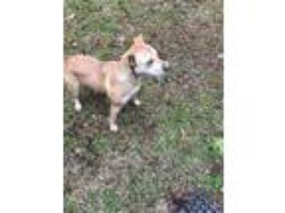 Adopt Callie a Tan/Yellow/Fawn Retriever (Unknown Type) dog in Ruston
