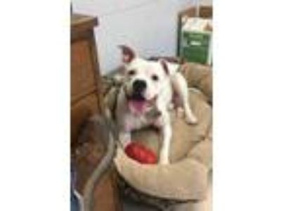 Adopt Franklin a White Mixed Breed (Medium) / Mixed dog in Manitowoc