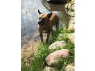 Adopt Jada a Cattle Dog, Mixed Breed